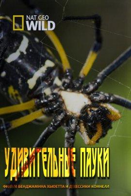 Удивительные пауки / Невероятные пауки / Incredible Spiders