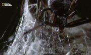 Удивительные пауки / Невероятные пауки / Incredible Spiders - Фильм