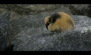 Лемминг. Маленький гигант севера / Lemming, the little giant of the North - Трейлер