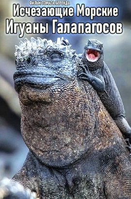 Исчезающие Морские Игуаны Галапагосов / Vanishing Dragons - The Disappearing Marine Iguanas of Galapagos