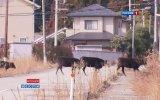 Япония спустя год после катастрофы - Телеканал РОССИЯ