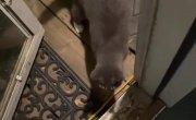 Кот. Настоящий кот