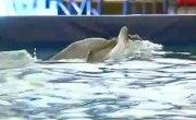 Дельфинарий в Уссурийске- реальное положение дел