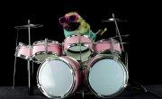 Просто собака играет на барабанах