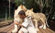 Львиная любовь:)