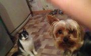 кот кормит собаку виноградом)