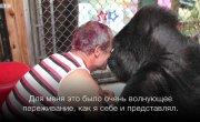 Басист Red Hot Chili Peppers посетил гориллу Коко