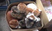 Коробочные котики